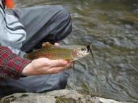 best lures for trout, trout lures