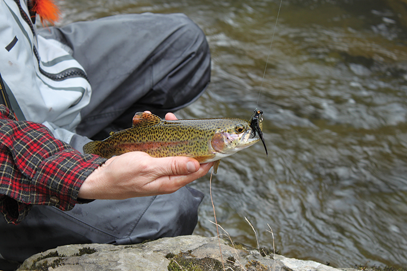 Get Flashy For Trout
