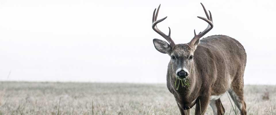 Deer-2014-In-Post-Photo