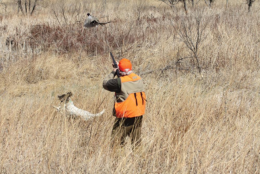 ringneck pheasant hunting, pheasant hunting, upland bird hunting