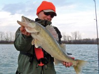 walleyes, catching walleyes, fishing for walleye, walleye, huge walleye