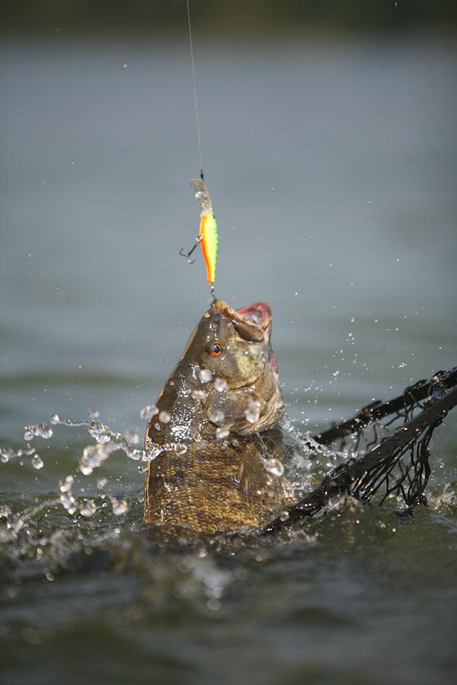 smallmouth bass, caught bass, catching a bass, bass, fishing for bass