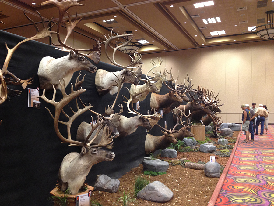 caribou, caribou trophies, boone and crockett awards