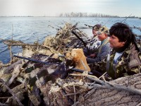 waterfowl, hunting waterfowl, southern waterfowl