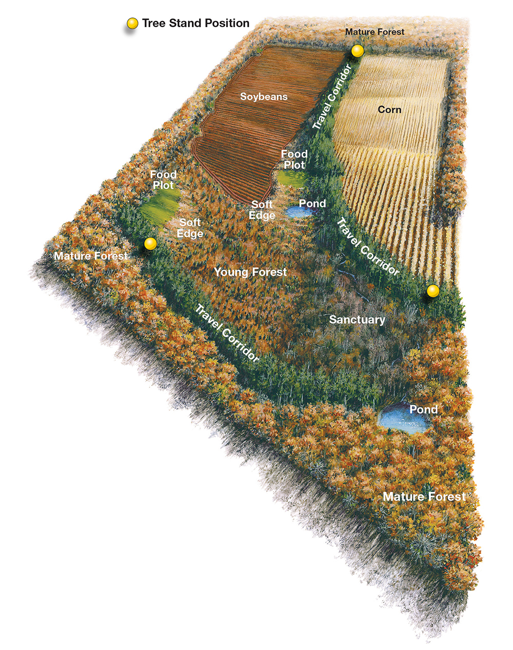 Topo Map of Lease, Deer Lease, Food Plots, Whitetail Deer