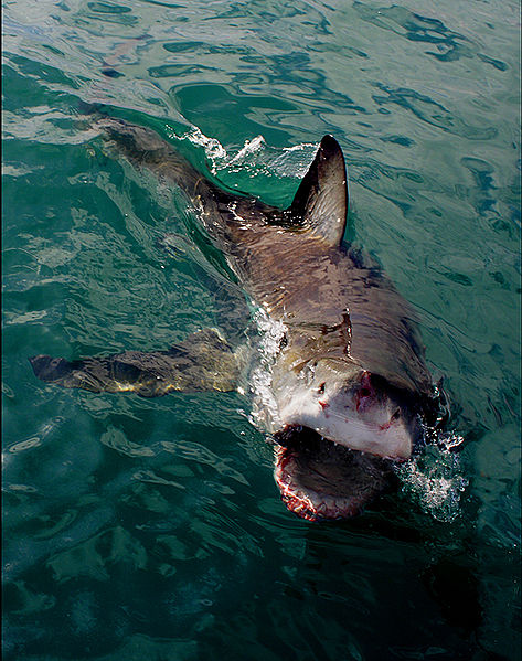 Piranha Fish Attack Photos .................!!!!!!!!!!! - Eface.in