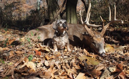 Pennsylvania remains one of the states where hunting with blood-trailing dogs is illegal, but sportsmen hope to see that change in 2014.