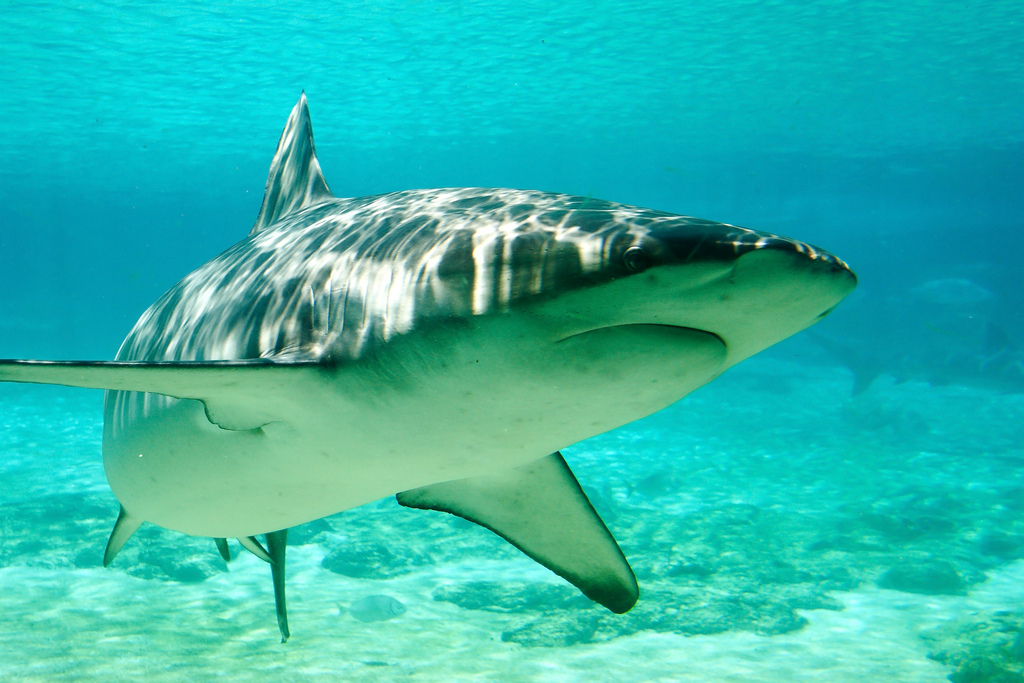 Man Dies From a Shark Attack While Kayak Fishing in Hawaii
