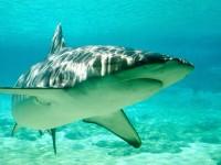 shark-green