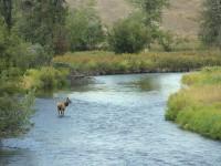 montana elk, elk poaching, marv hoyt, elk hunting