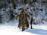 Coyote Hunting, Coyotes, Hunt Coyote