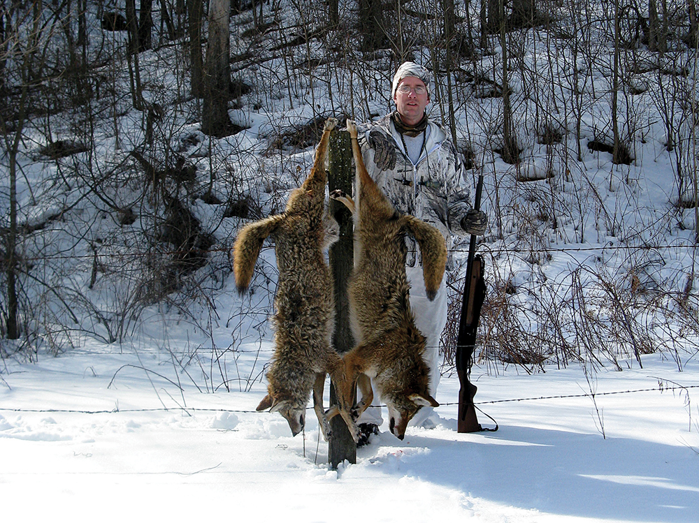 Coyote Calling Tips for Hunting at Close Range