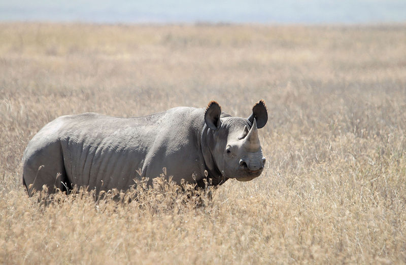 Corey Knowlton Receives Death Threats for Hunting African Black Rhino