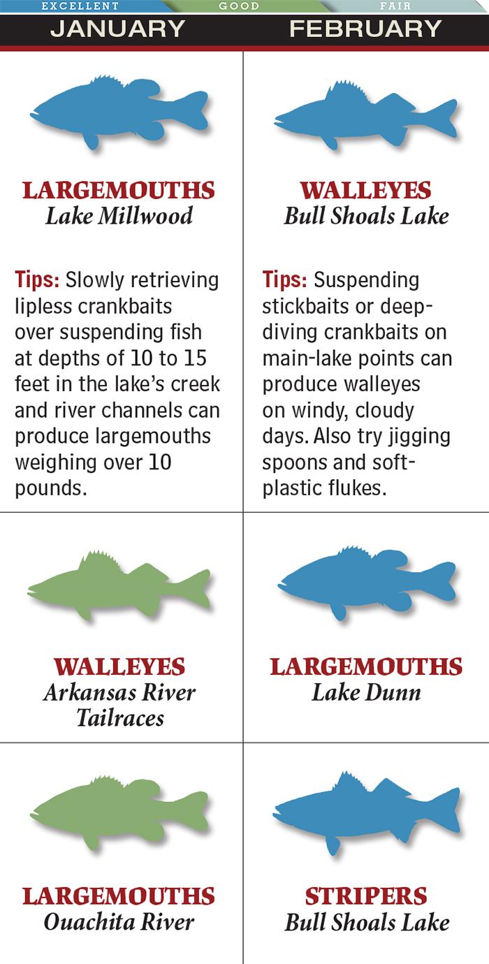 Hottest February Walleye Fishing in Arkansas