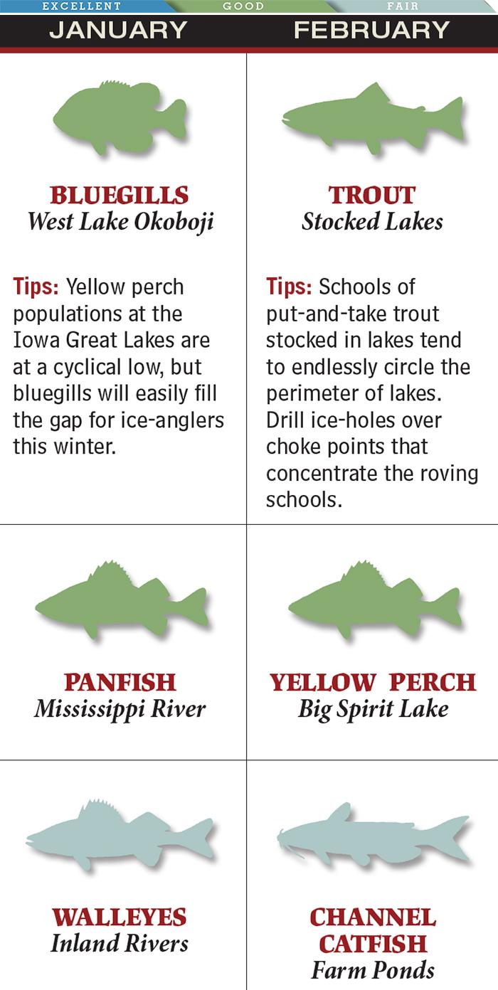 Best February Trout Fishing in Iowa