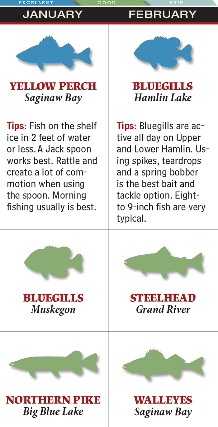 Michigan's Best February Bluegill Fishing is at Hamlin Lake