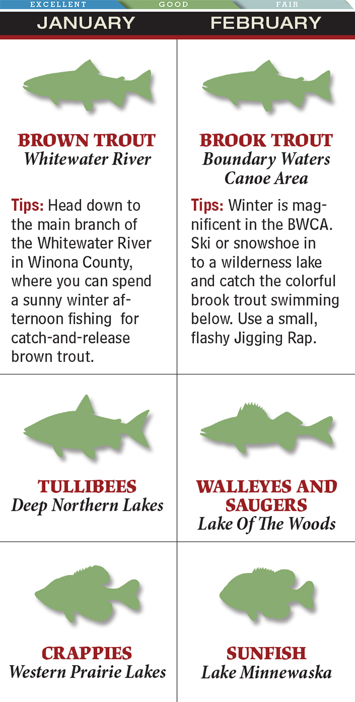 Best Lakes for February Trout Fishing in Minnesota