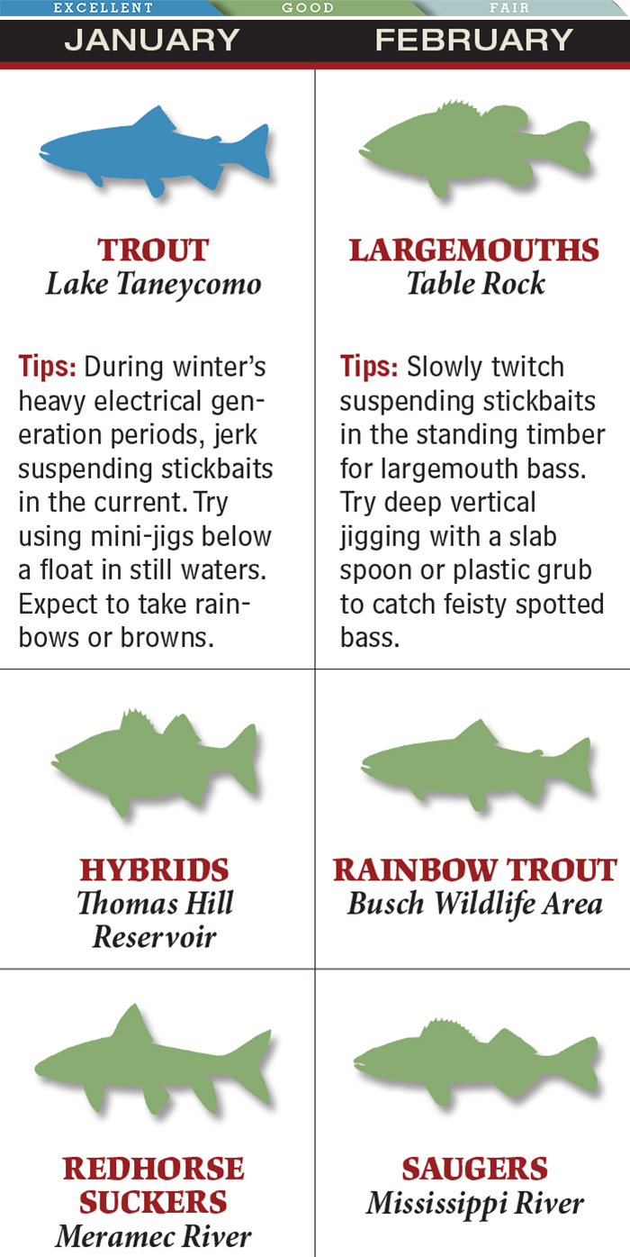 Your Best Bets for February Bass Fishing in Missouri