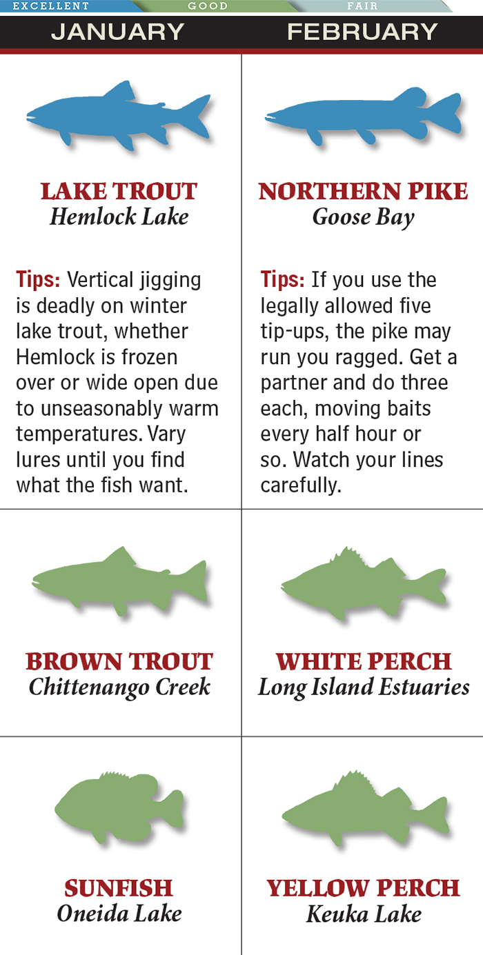 February Fishing in New York: Northern Pike & Perch