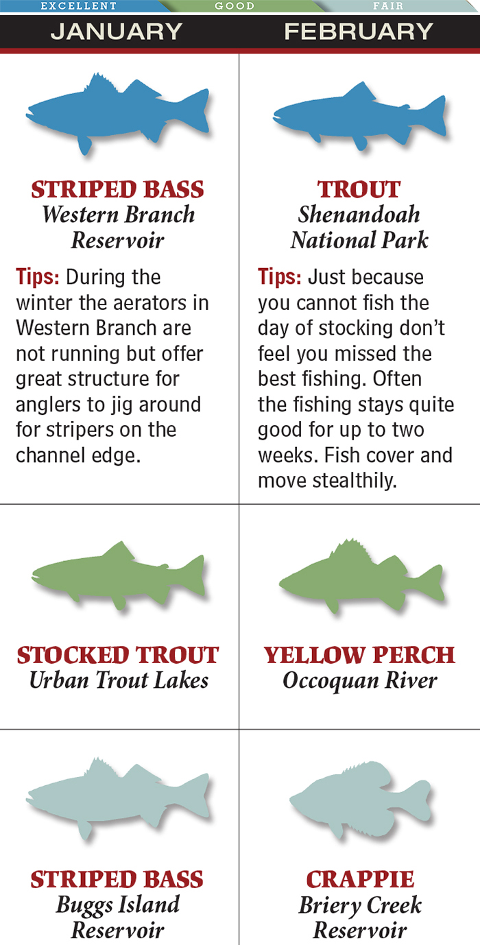 Top Options for February Trout Fishing in Virginia