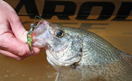 Whether crappie, panfish or bass fishing in Alabama, there's something for every angler this February.