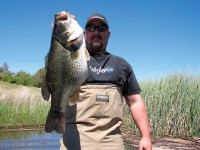 Bass Fishing, Bass, LMB