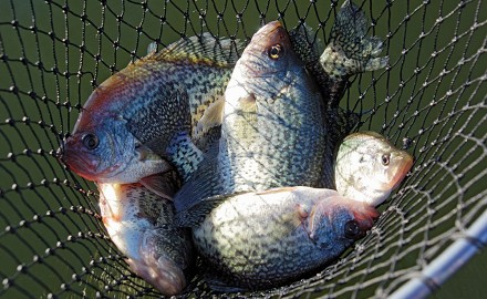 Let's take a look at the options available for February Crappie Fishing in North Carolina.