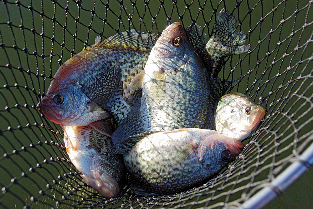 Top Options for February Crappie Fishing in North Carolina