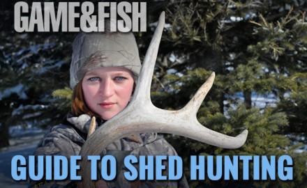 shed hunting, hunting sheds, antler porn, finding sheds, dropped antlers, cast antlers