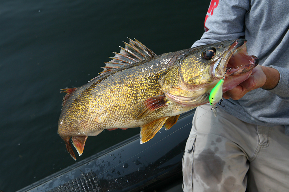Hottest february walleye fishing in arkansas game fish for Fishing in arkansas