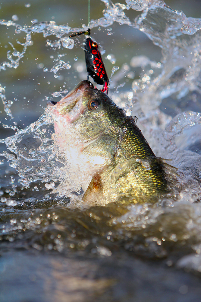 10 best bass lures to watch at this year's classic - game & fish, Soft Baits