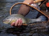 Trout, Brook Trout, Fishing for Trout