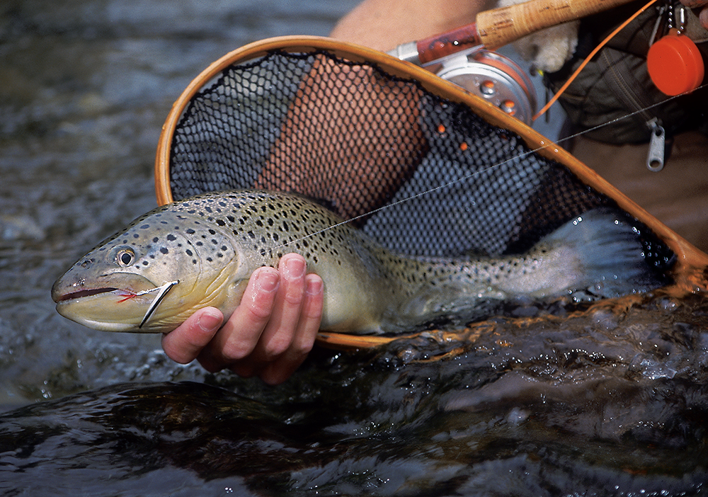 Your best bets for february trout fishing in the rocky for Best trout fishing in new hampshire