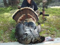 Gobbler, Turkey, Turkey Hunting, Hunting Turkey, Arizona Turkey Hunting