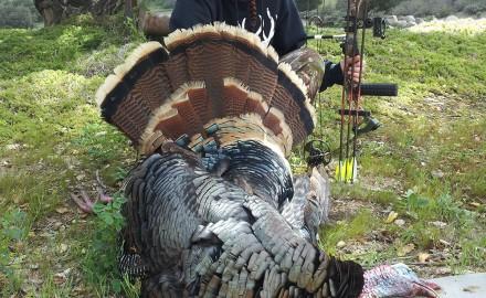 Gobbler, Turkey, Turkey Hunting, Hunting Turkey, Arizona Turkey Hunting
