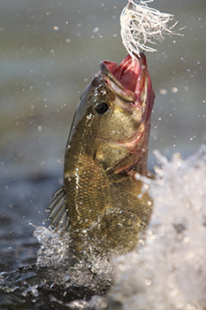 Top Places for Bass Fishing in Arizona