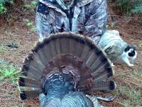 Gobbler, Turkey, Turkey Hunting, Hunting Turkey, Mississippi Turkey Hunting