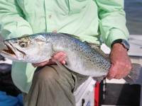 Speckled Trout, Sea Trout, Trout, Trout Fishing