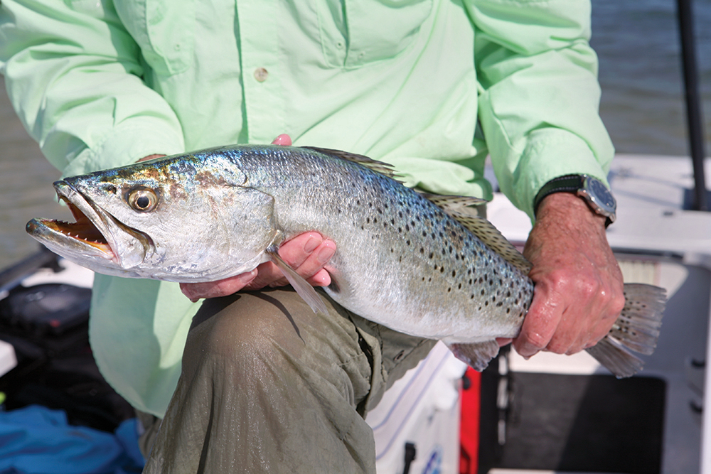Your Best Spring Fishing in Florida