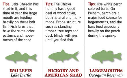 From lakes to rivers to reservoirs and which species to target, these are your best bets for spring fishing in Virginia.