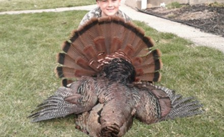Gobbler, Turkey, Turkey Hunting, Hunting Turkey, Kentucky Turkey Hunting