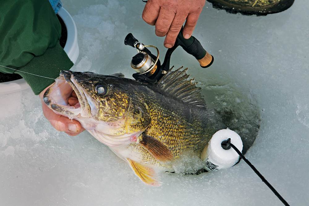 Your best spring fishing in missouri game fish for Ice fishing walleye videos