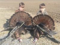 Gobbler, Turkey, Turkey Hunting, Hunting Turkey, North Carolina Turkey Hunting
