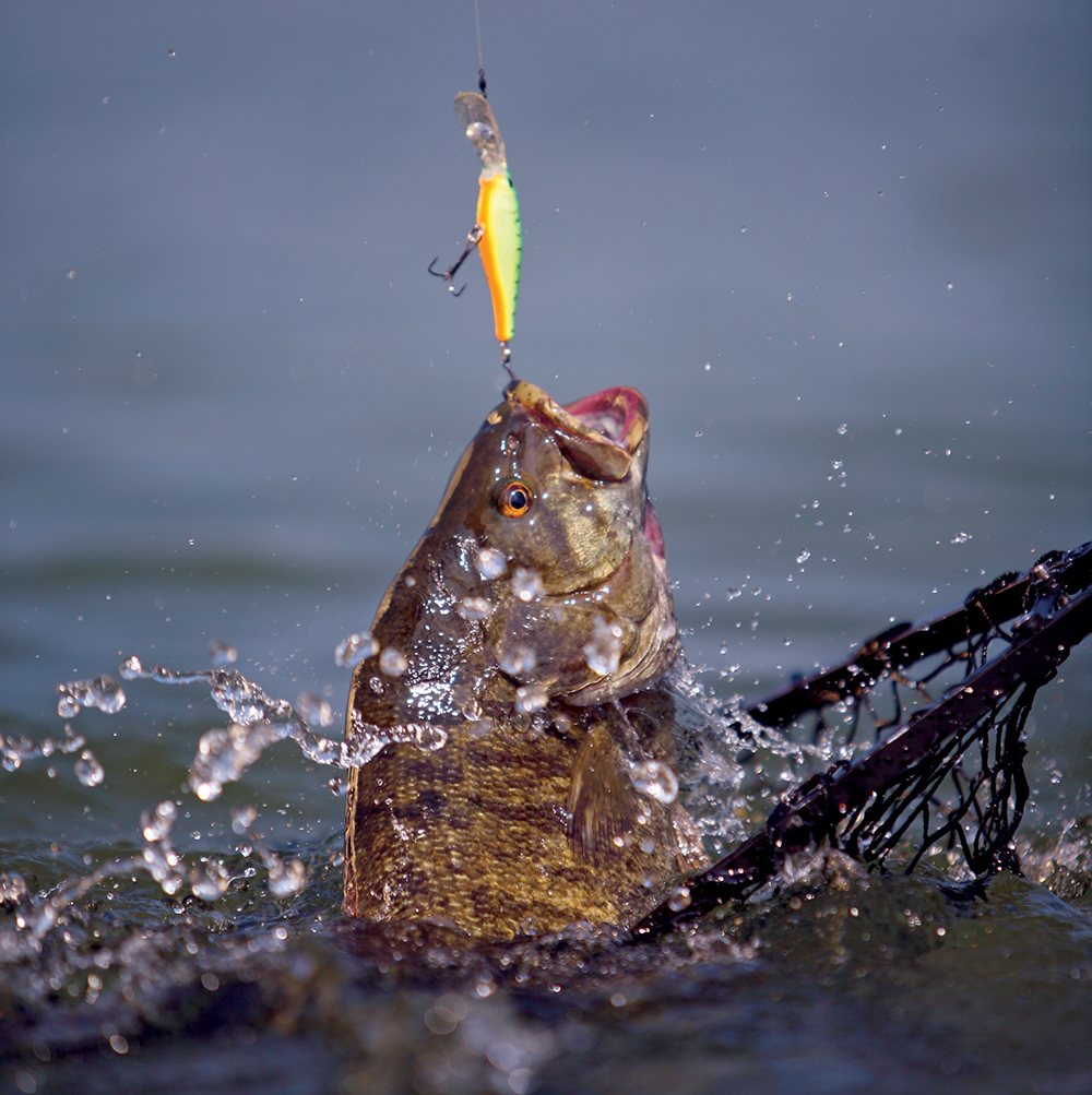 Top Places for Bass Fishing in New York