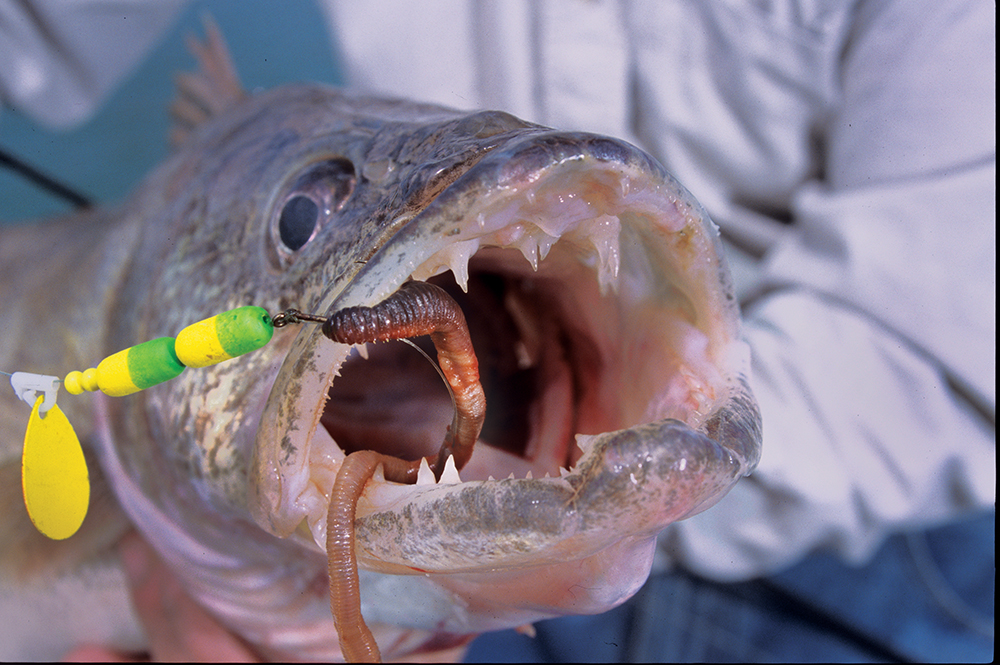 Your best spring fishing in new york game fish for New york state fish
