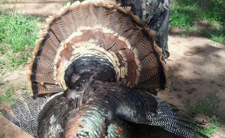If you're looking to do some Oklahoma turkey hunting this spring, this is your one-stop shop for population numbers, harvest info, and hunting opportunities.