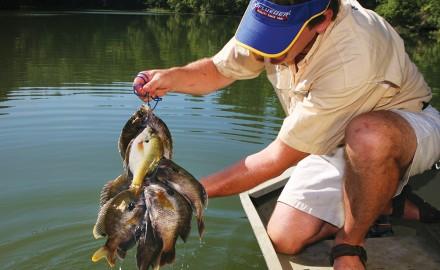 Bream Fishing, Bream, Panfish, Bluegill, Bluegill Fishing