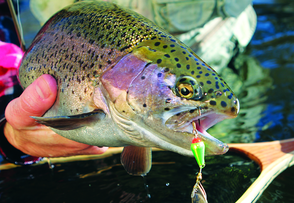 Your best spring fishing in colorado game fish for Trout fishing colorado