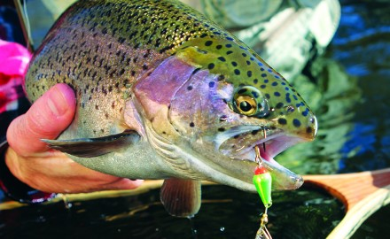 From lakes to rivers to reservoirs and which species to target, these are your best bets for spring fishing in New Mexico.
