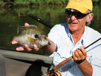 Bream, Sunfish, Bluegill, Bluegill Fishing